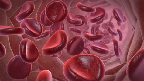 What's in Blood? A Look at Types of Blood Cells - Kids