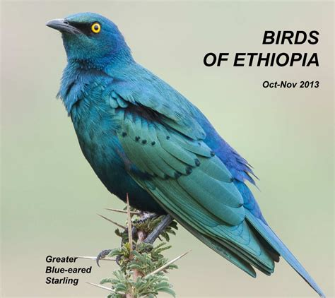 Birds of Ethiopia by Peter Day   Blurb Books