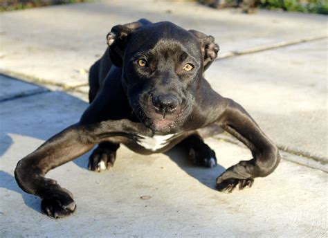 This Abandoned Puppy Had Severely Bowed Legs--But Look At